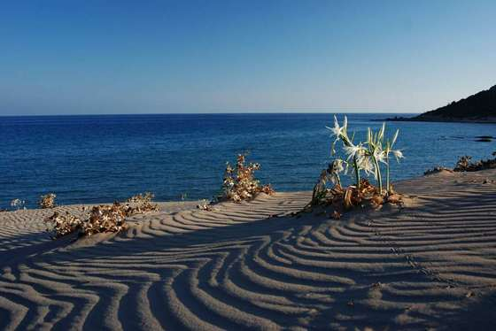 Лучшие пляжи в болгарии