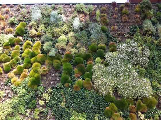 Сад открылся в 2010 году, а создал его архитектор Франческо Боллани